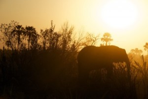 elephant-828991_960_720